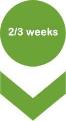 2/3 weeks